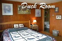 The Duck Room